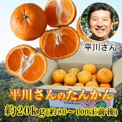 沖縄山原産・平川さんのこだわりタンカン