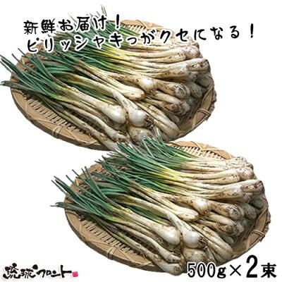 沖縄産 島らっきょう 1kg (500gx2束)