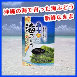 島人ぬ宝 海ぶどう/130g[パナハウス]