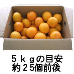 あまSUN5kg