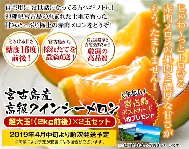 【代引き不可】【宮古島産】糖度16度前後の激甘赤肉クインシーメロン超大玉3L(2kg前後)×2玉セット