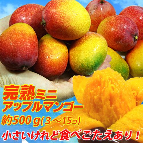 【7月中旬より順次発送】沖縄県産アップルミニマンゴー約500g(3玉~15玉)アップルマンゴー ミニマンゴー 家庭用 訳ありマンゴー 激安マンゴー マンゴー まんごー <br>玉数の指定は出来ません