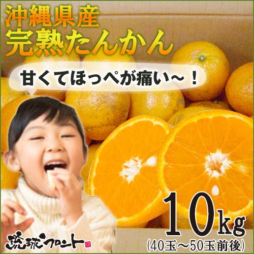 【送料無料】沖縄県産 たんかん果実/約10kg (秀品・優品/M~3Lサイズ混玉・40玉~50玉前後)