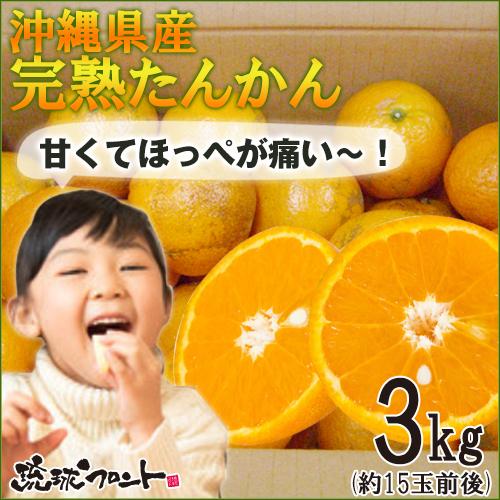 【送料無料】沖縄県産 たんかん 果実 /約3kg (秀品・優品/M~3Lサイズ混玉・15玉前後)