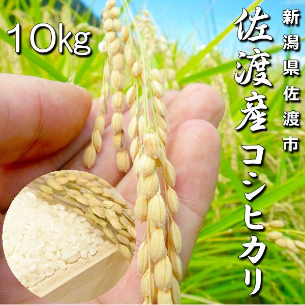 キンちゃん米10kg
