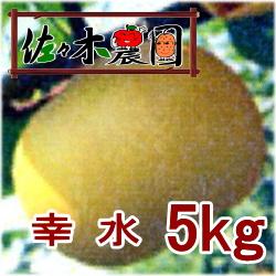 【ご予約受付中】幸水 5kg [佐々木農園]