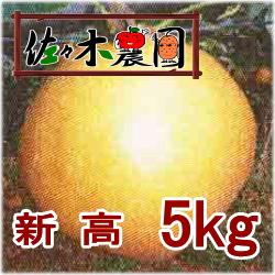【ご予約受付中】新高 5kg [佐々木農園]