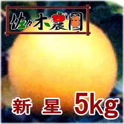 【ご予約受付中】新星 5kg [佐々木農園]