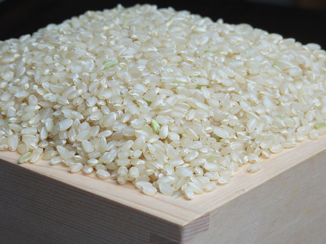 2020ミルキークイーン玄米