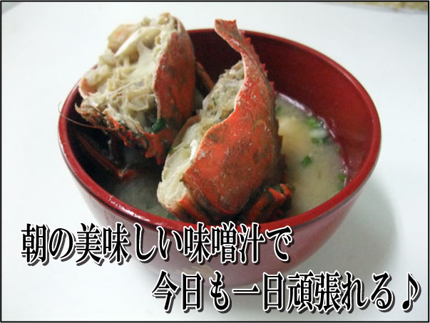 味噌汁にベストマッチの石ガニ!