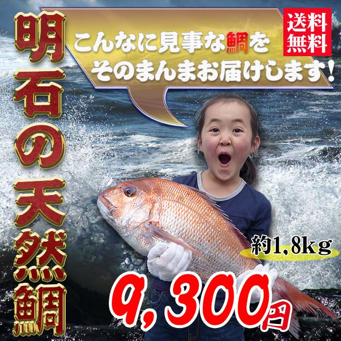 瀬戸内海産の天然鯛の通販。お取り寄せ。