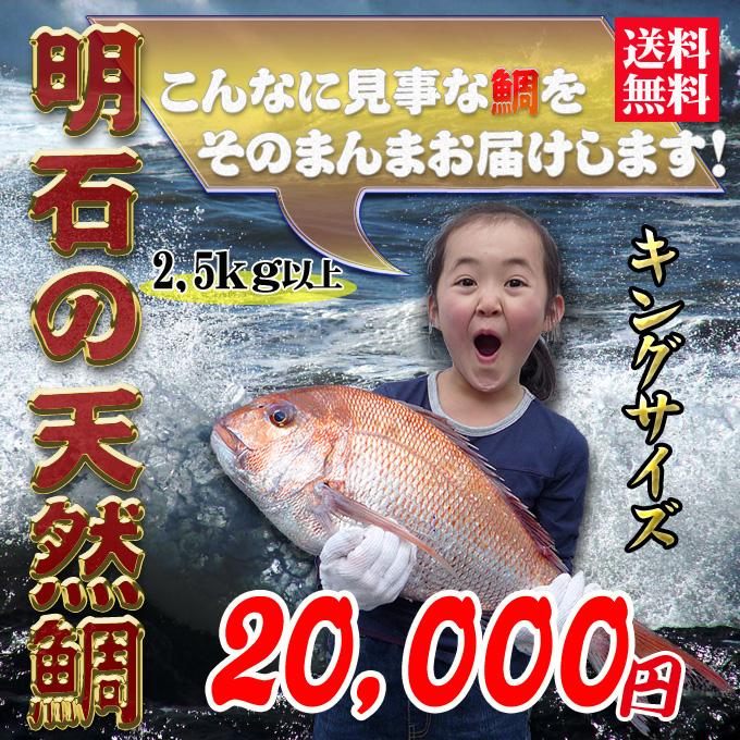 瀬戸内海産の天然鯛の通販。お値段