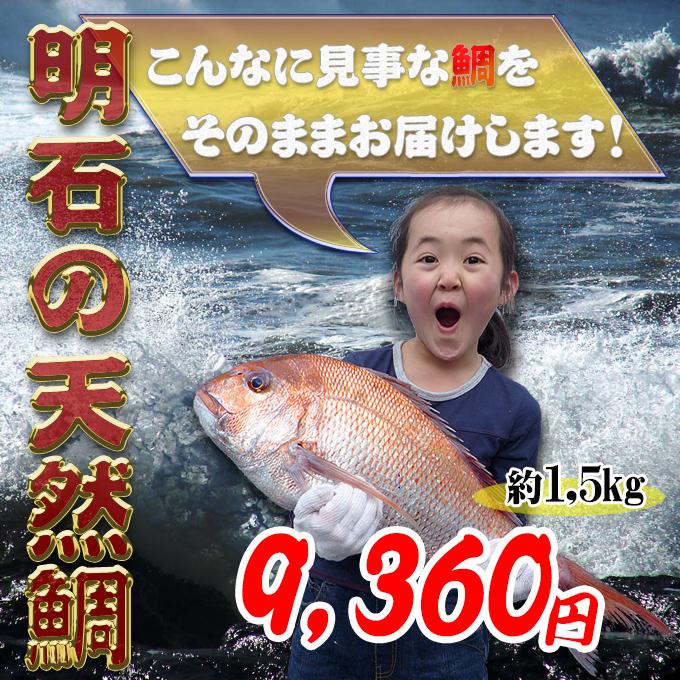 明石鯛の通販 天然鯛の価格、値段