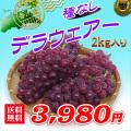 香川産!白方の種なしブドウの通販サイト。新鮮市場【産直あきんど】