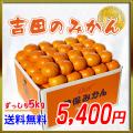 [贈答品]香川県産の吉田曽保みかん10kg