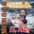 明石の天然鯛の通販