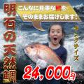 天然鯛の通販、お取り寄せ、販売店