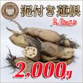 [徳島産]朝掘り!泥付きれんこん2.0kgセット!