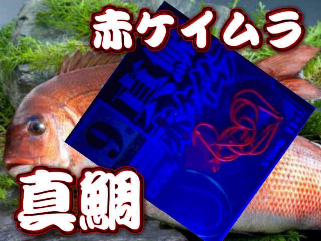 喰い渋りに効果有り!妖しく光る赤ケイムラカラー 赤ケイムラ真鯛