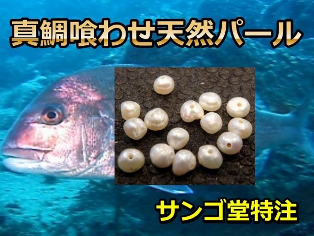 真鯛喰わせ 天然パール   マダイ・イサキ・ワラサ  サンゴ堂特注