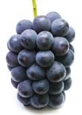 食べごたえ抜群 山形のニューピオーネ(種無し) 約2キロ(3~4房入)