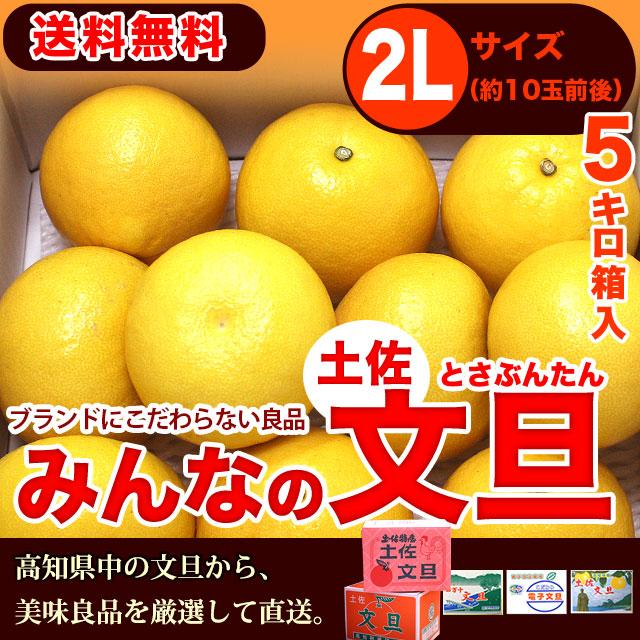 みんなの土佐文旦(とさぶんたん)・5kg・2Lサイズ・高知県内・中堅クラスの味良し厳選品
