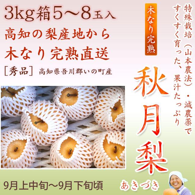 秋月梨(あきづきなし)秀品・3kg・5~8玉入り【産地直送】