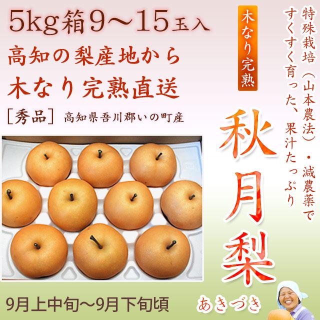 秋月梨(あきづきなし)秀品5kg・9~15玉入り【産地直送】