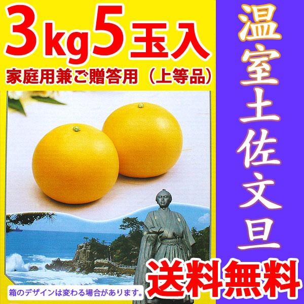 温室土佐文旦(ハウス栽培品)・家庭用兼ご贈答用(上等品)・3kg・5玉入【送料無料】