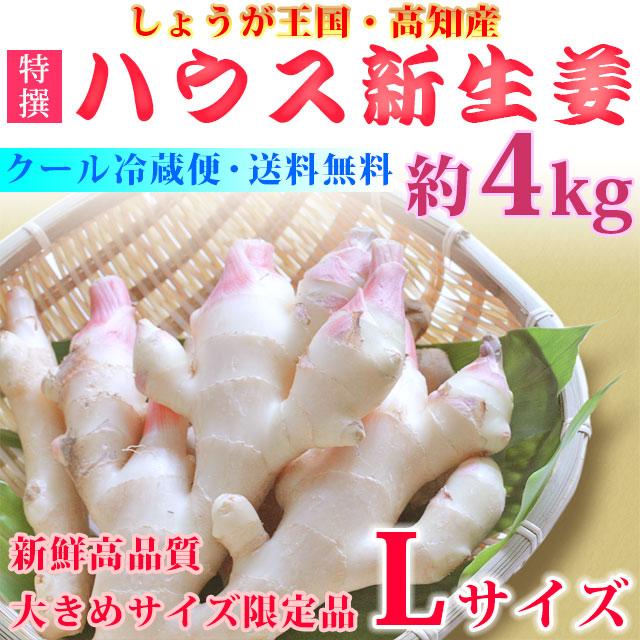 ショウガ王国・高知のハウス新生姜(しょうが)・高品質A品・大きめLサイズ・約4kg【高知県土佐市他】