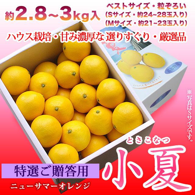 特選ご贈答用・土佐小夏(高知県産)・中箱(約2.8〜3kg)・S〜Mサイズ
