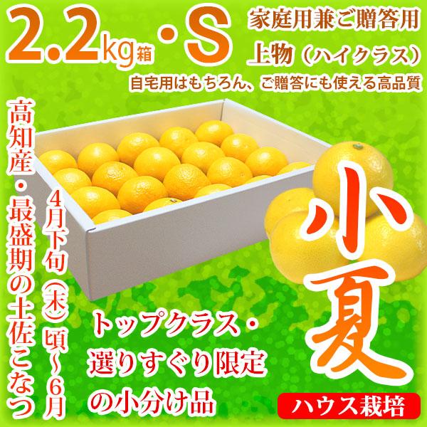土佐小夏(高知県産)・家庭用兼ご贈答用(上物・ハイクラス)・小箱(約2.2kg)・Sサイズ