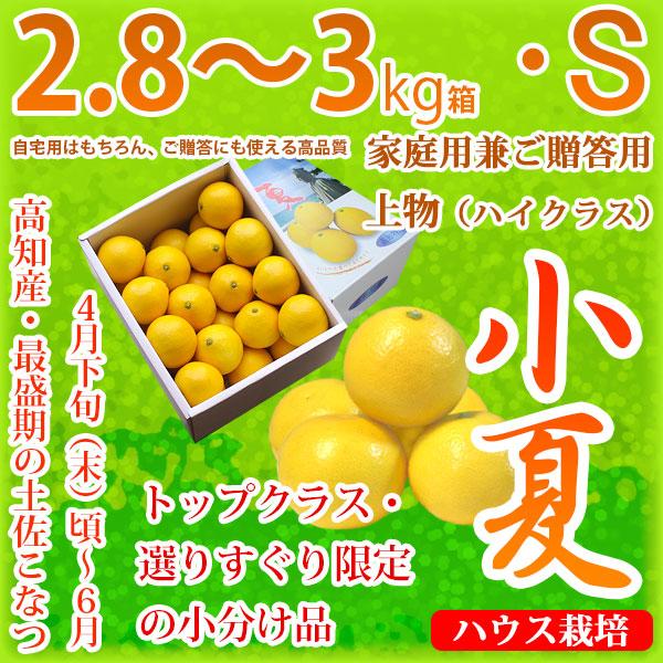 土佐小夏(高知県産)・家庭用兼ご贈答用(上物・ハイクラス)・中箱(約2.8~3kg)・Sサイズ