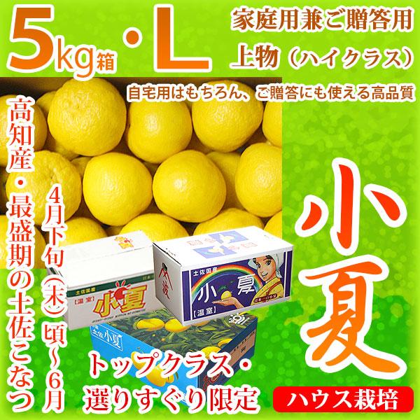 土佐小夏(とさこなつ)・高知県産・家庭用兼ご贈答用(上物・ハイクラス)・大箱(約5kg)・Lサイズ