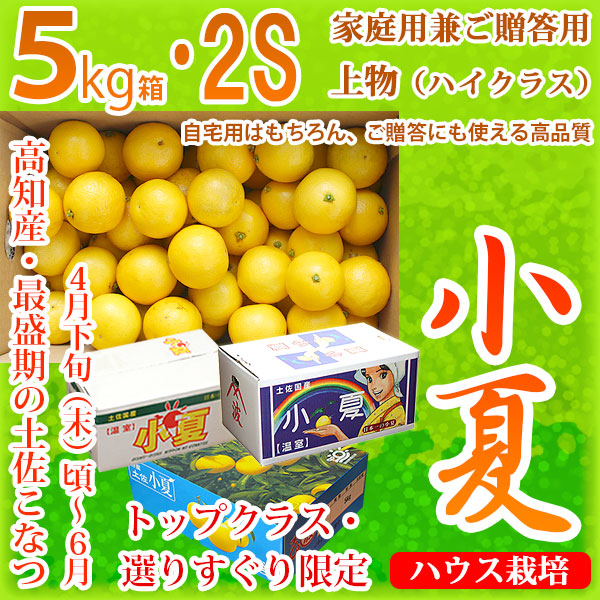 土佐小夏(とさこなつ)・高知県産・家庭用兼ご贈答用(上物・ハイクラス)・大箱(約5kg)・SSサイズ
