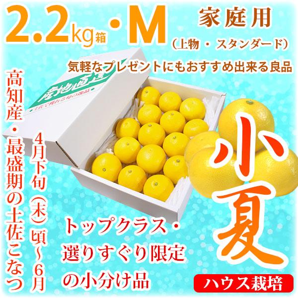 土佐小夏(高知県産)・家庭用(上物・スタンダード)・小箱(約2.2kg)・Mサイズ