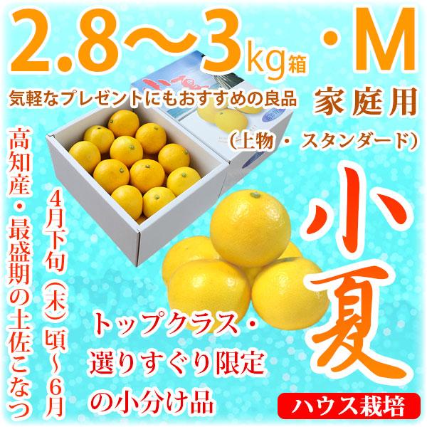 土佐小夏(高知県産)・家庭用(上物・スタンダード)・中箱(約2.8~3kg)・Mサイズ