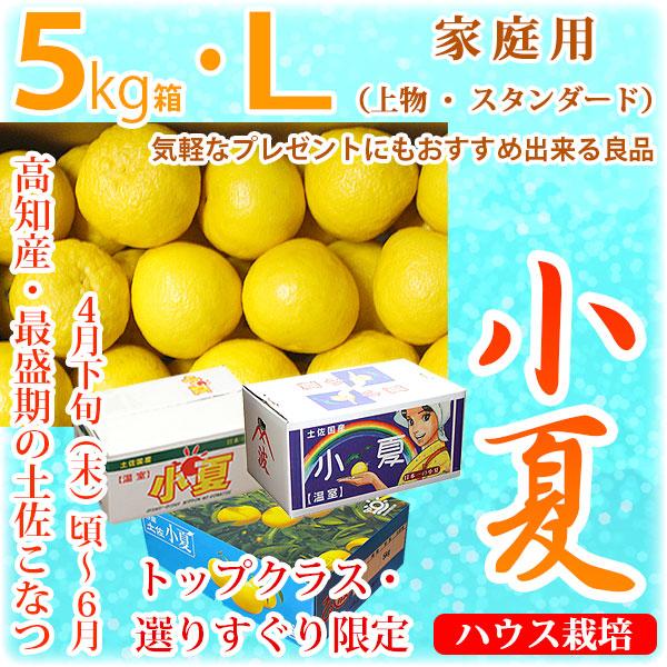 土佐小夏(とさこなつ)・高知県産・家庭用(上物・スタンダード)・大箱(約5kg)・Lサイズ
