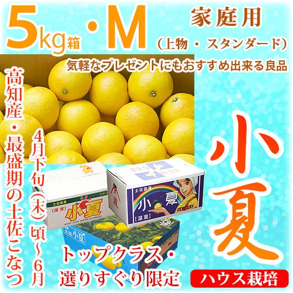 土佐小夏(とさこなつ)・高知県産・家庭用(上物・スタンダード)・大箱(約5kg)・Mサイズ