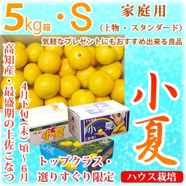 土佐小夏(とさこなつ)・高知県産・家庭用(上物・スタンダード)・大箱(約5kg)・Sサイズ