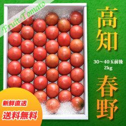 高知県・春野産フルーツトマト・生産者厳選・特選品・約2kg(30~40玉前後入り) 【送料無料】