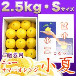 土佐小夏(高知県産)・山波(やまなみ)・ダイヤ・一般ご贈答用・小箱(約2.5kg)・Sサイズ【送料無料】