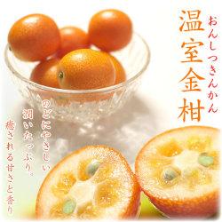 温室フルーツ金柑