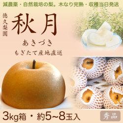 【木なり完熟・もぎたて】秋月(あきづき)梨(なし)・秀品・3kg・約5~8玉入り・厳選農家の産地直送
