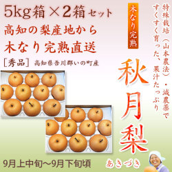 秋月梨(あきづきなし)秀品5kg×2箱セット【産地直送】