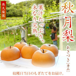 秋月(あきづき)梨