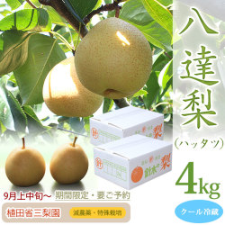 【産地直送】八達 梨(ハッタツ なし)・秀品・4kg(2kg×2箱)・8~12玉