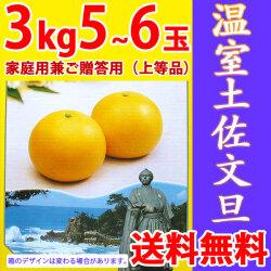 温室土佐文旦(ハウス栽培品)・家庭用兼ご贈答用(上等品)・3kg・6玉入【送料無料】