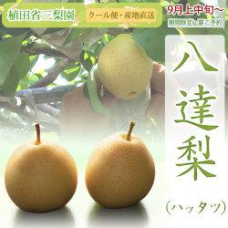 八達(ハッタツ)梨