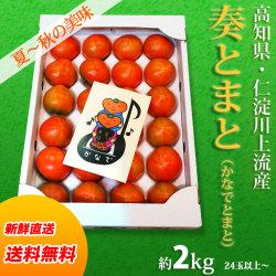 【送料無料】高知県仁淀川上流域産・奏(かなで)とまと・秀品・約2kg(24玉位~)・ご贈答用・夏から秋の味濃厚トマト